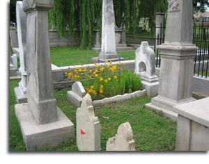 какие цветы посадить на могиле