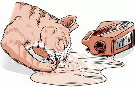 признаки отравления у кошек