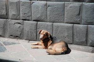 дать объявление о пропаже собаки