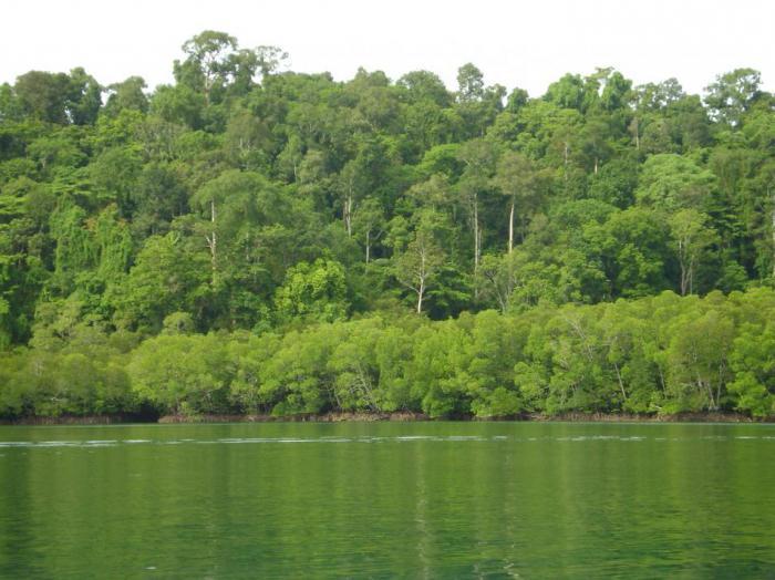 тропический лес индии 3 класс