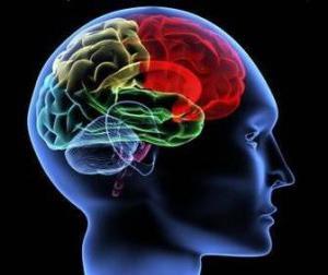 тренировка мозга да памяти
