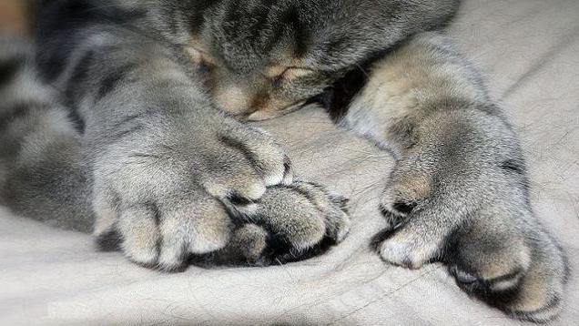 сколько пальцев у кошки фото