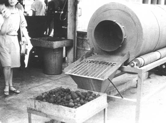 древесный уголь цена