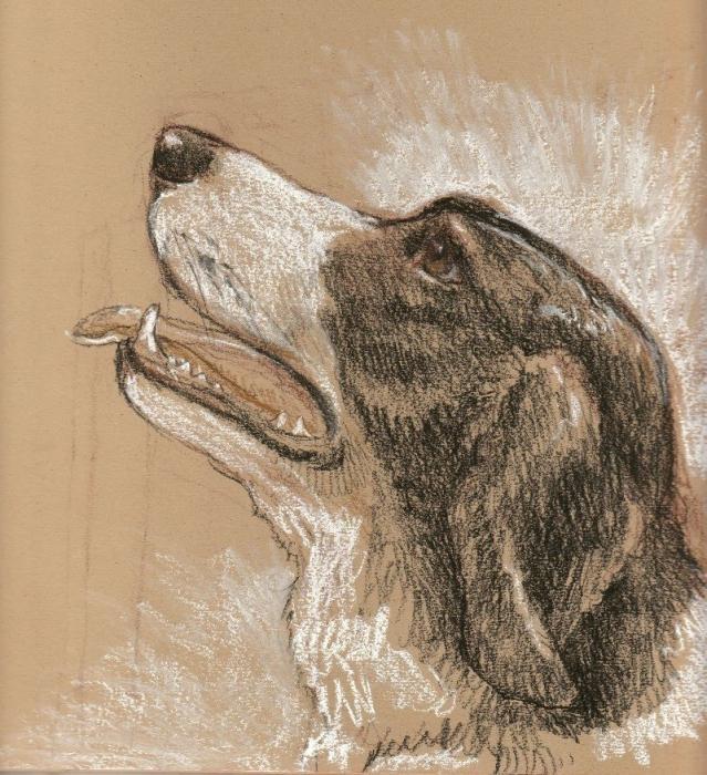 как нарисовать собак