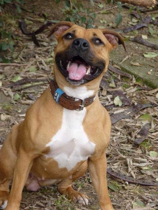 Собаки средних пород список с фотографиями и описаниями