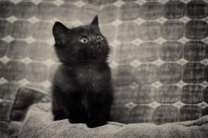 Приснился черный кот говорящий