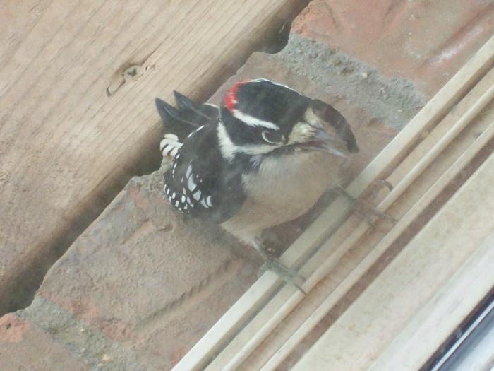 Птица залетела в окно - примета хорошая или плохая?.