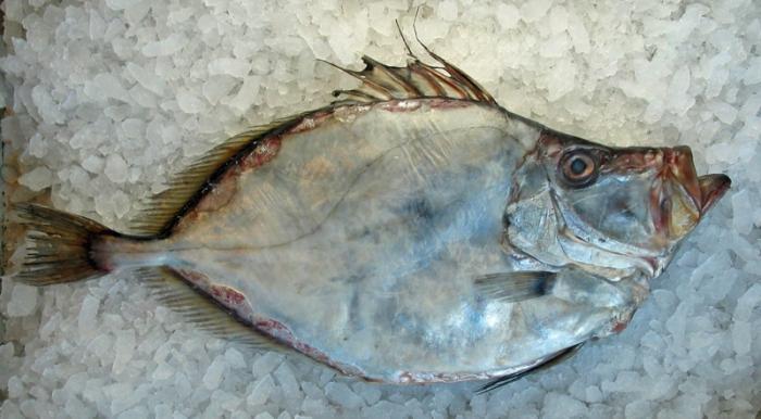 рыба дори фото