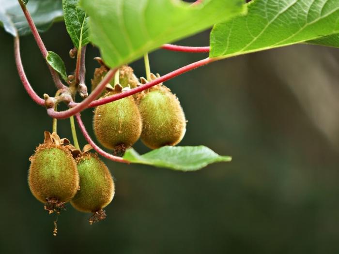 Смотреть Кожура фруктов содержит огромное количество пестицидов видео