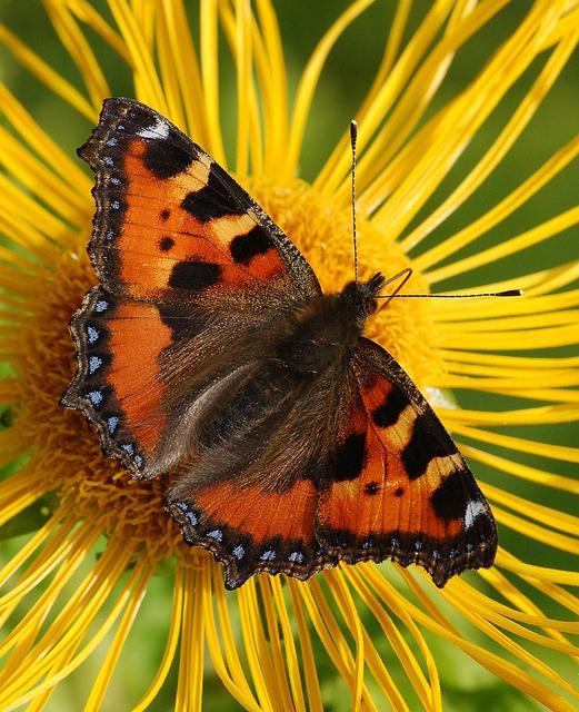 как выглядит теплица бабочка