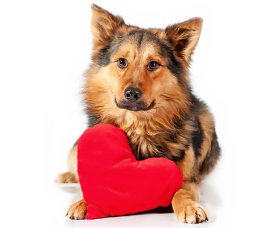 борменталь в собачьем сердце: