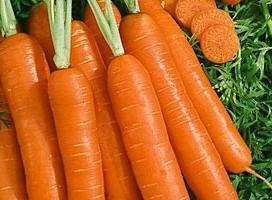 Когда сажать морковь