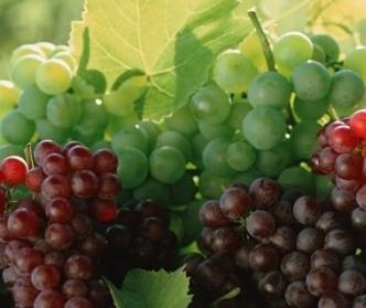 Виноград кристалл описание сорта фото
