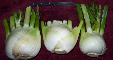 Выращивание фенхеля овощного