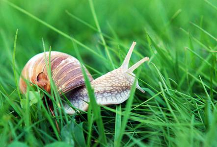 как избавиться в огороде от лишней траты