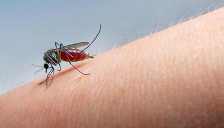 Снять зуд после комаров в домашних условиях 669