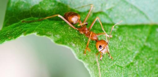 как избавиться от муравьев на дачном участке
