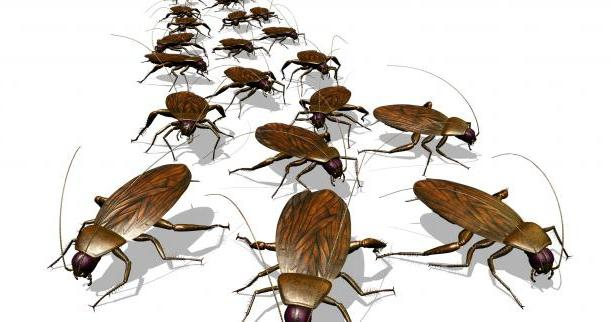 К чему снятся беременные тараканы много живые 24