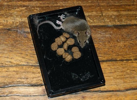 Клеевые ловушки для мышей