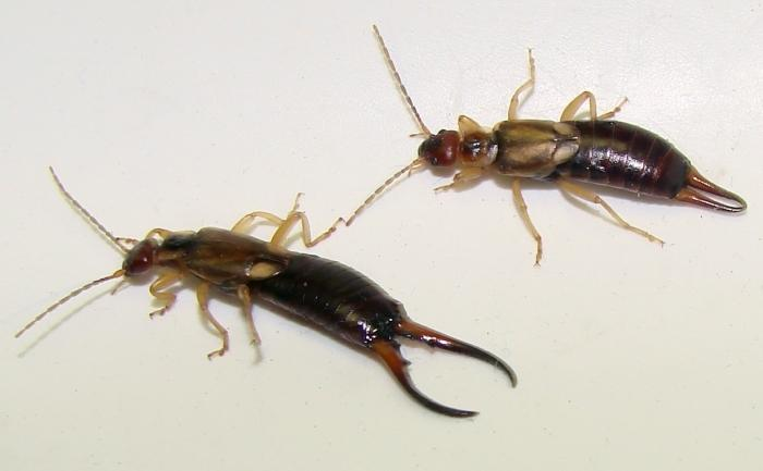 убрать паразитов организма человека