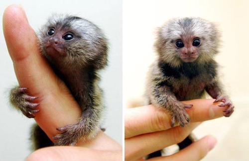Заметки натуралиста. Какое оно - самое маленькое животное ...  Самое Маленькое Животное в Мире