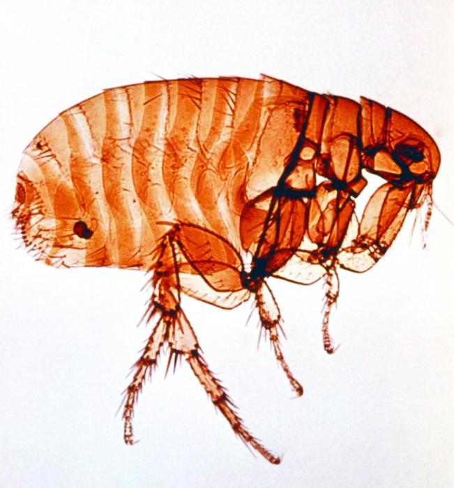 как выводить паразитов из организма народными средствами