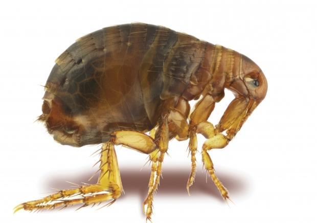 делать паразиты в организме