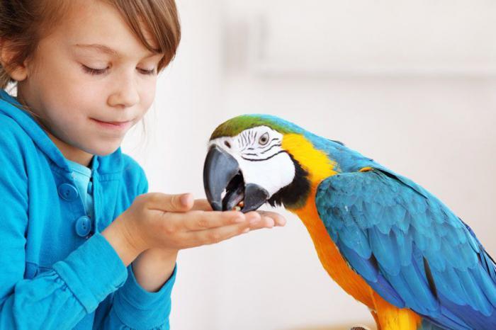 интересные факты про попугаев