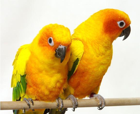 интересный факт о попугаях