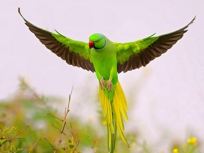 интересные факты из жизни попугаев