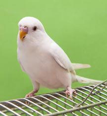 интересные факты о попугаях для детей