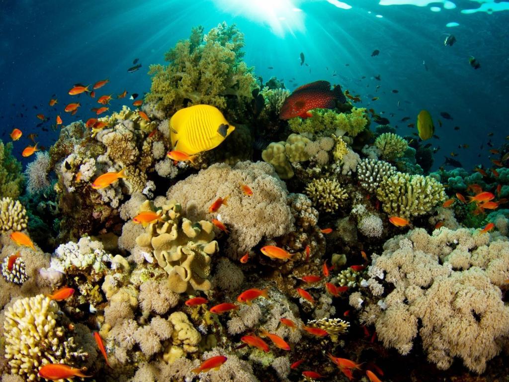 Теплокровные рыбы: описание, фото