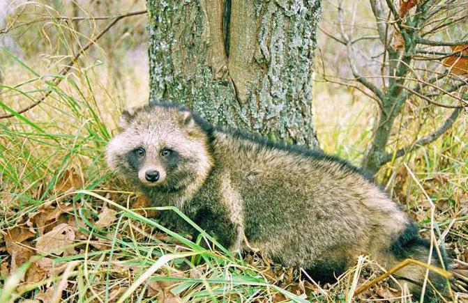 национальный парк смоленское поозерье животные