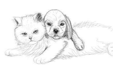 как нарисовать кошку и собаку карандашом поэтапно для начинающих