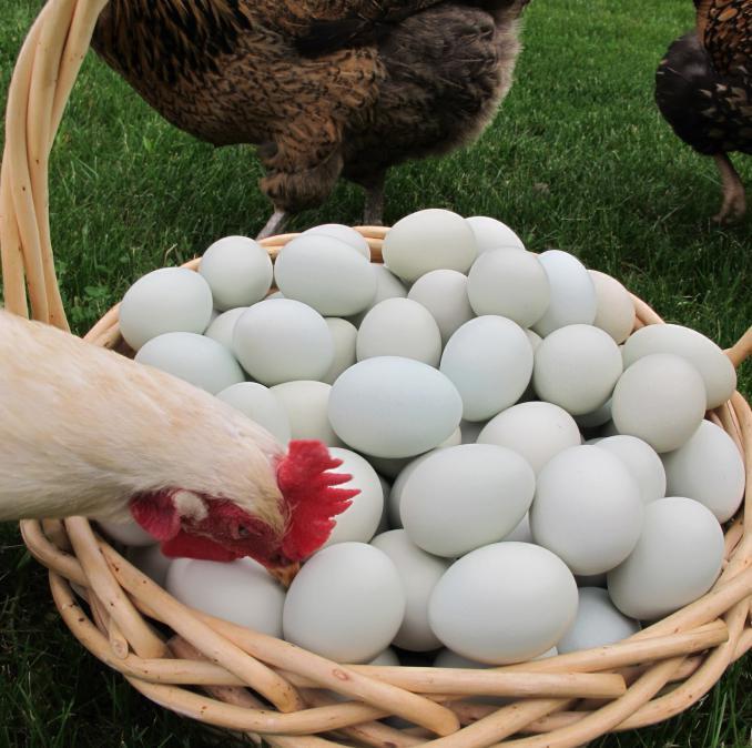 куриные яйца без скорлупы