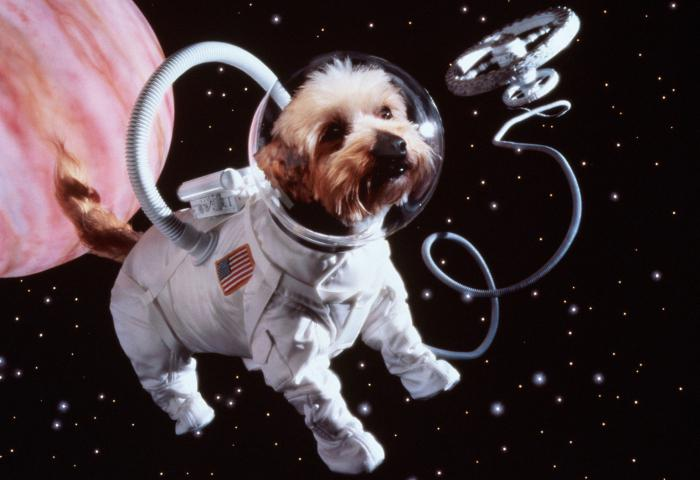 картинки первые космос в которые животные полетели