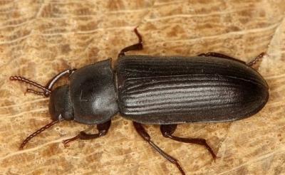 Черные жуки в доме фото 5