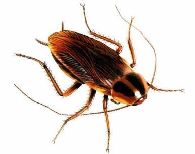 какое эффективное средство от паразитов в организме