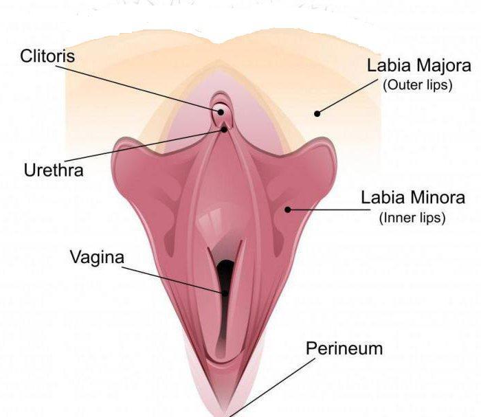 Развлечения с женской уретрой