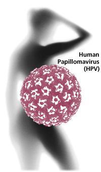 hpv инфекция у женщин что это