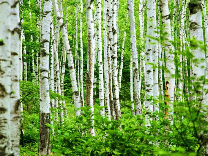 деревья россии названия и фото