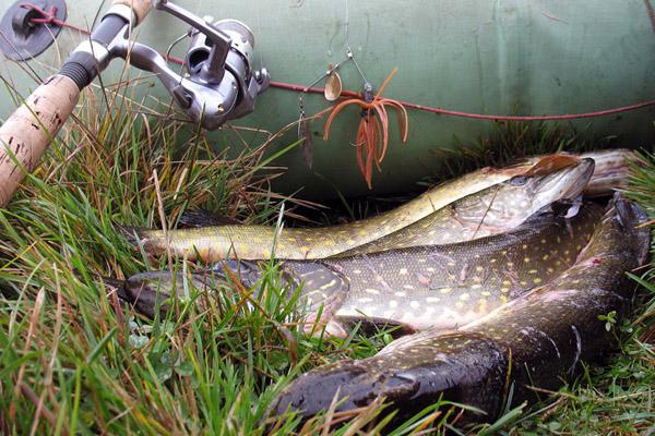 Рыбалка на платных прудах