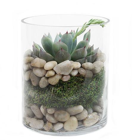 Каменный цветок растение купить