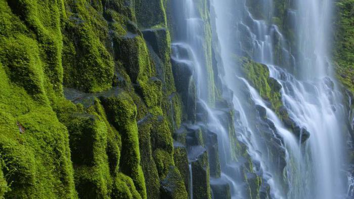 необычной красоты фонтан находится в портланде штат орегон сша