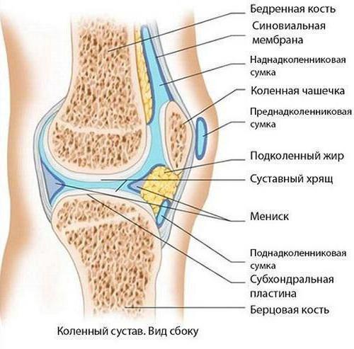 синовиальная оболочка сустава