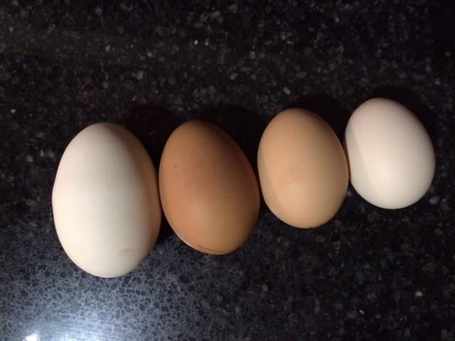 Категории яиц