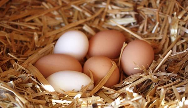 Что такое столовые яйца