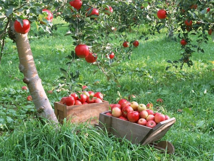 Яблоко от яблони 2 порно