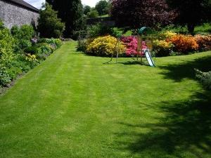 Газонная трава которую не надо стричь цена