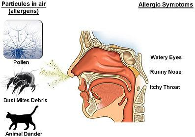 бытовая аллергия у взрослых